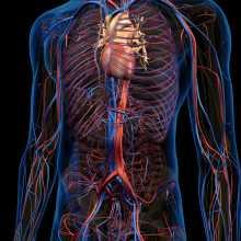 인공혈관 이미지 202107090001.jpg